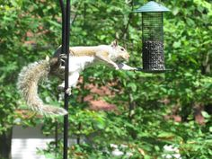 Linda Weaver sent us this awesome photo of a squirrel! Send us your photos: web@poconorecord.com