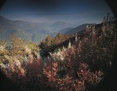 a7c87f55fbab8 18 fantastiche immagini su Il Bosco del Sorriso - Forest of Smiles ...