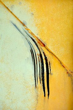 Catalpa by LuAnn.Ostergaard