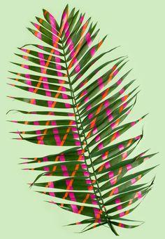 art direction | painted plant - sarah illenberger