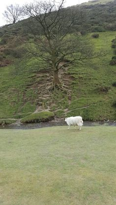Carding Mill Valley Picnic Spot, Places To See, Things To Do, Country Roads, California, Plants, People, Plant, People Illustration