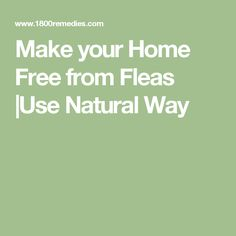 Make your Home Free from Fleas  Use Natural Way