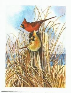 Beautiful print, from an original watercolor, of two cardinals on the shores of Lake Michigan by a local artist.