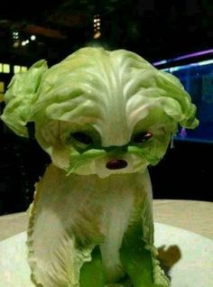 Lettuce Puppy Will Make You Swear Off Vegetables - Food Carving Ideas Veggie Art, Fruit And Vegetable Carving, Veggie Food, Food Design, Cute Food, Good Food, Awesome Food, Food Sculpture, Creative Food Art