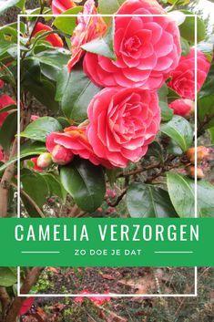 Vegetable Garden, Garden Plants, House Plants, Outside Living, Garden Inspiration, Gardening Tips, Planting Flowers, Lush, Flora