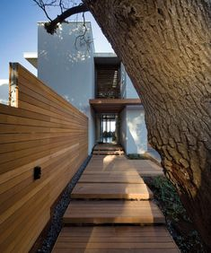 Upon arrival at to this modern house, there are two milkwood trees that flanking the entrance, and a floating timber step platform and pergola lead towards the front door. #FloatingSteps #WoodSteps #Landscaping