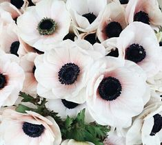 Anemone for the floral mix My Flower, Flower Power, Beautiful Flowers, Flower Types, Bouquet Champetre, Plants Are Friends, Planting Flowers, Floral Arrangements, Wedding Flowers