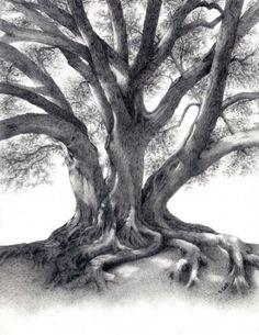 fig tree drawing