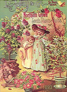Vintage Seed Catalog - Seeds, Plants & Bulbs