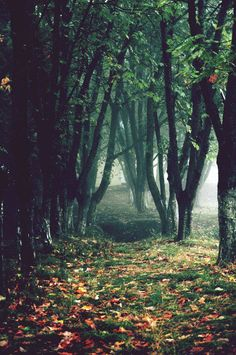 Autumn Forest.. I wanna go for a walk this fall, early in the morning with dew still floating low over the ground, auburn colors scattered through the trees... basking in the beauty!!!
