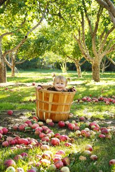 Might work for Carly - cute Cute Photography, Autumn Photography, Children Photography, Family Photography, Fall Baby Photos, Fall Family Pictures, Autumn Pictures, Apple Orchard Photography, Baby Apple