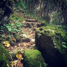 La Garganta Verde - Sierra de Grazalema