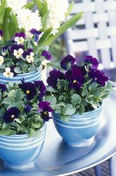 Plant trends | Take away trends