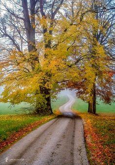 The road is calling (no location given) by Lars van de Goor cr.🍂