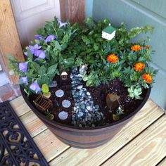 Mini Jade Plant   Fairy Garden | Jardín | Pinterest | Jade Plants, Plants  And Gardens