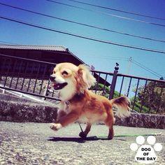 DOG OF THE DAY   @nicomint  May.10,2012 #dogofthedayjp  #webstagram - @dogoftheday- #webstagram