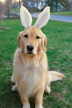 Puppy rabbit