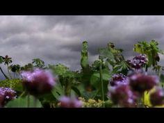 Lemon Jelly - aka Go (Vocals by William Shatner! Digital Film, William Shatner, Film Inspiration, Short Films, Motion Graphics, Assessment, No Time For Me, Jelly, Muse