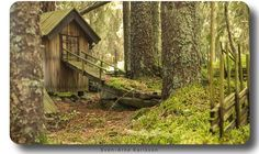 Find this miniature village in the woods today
