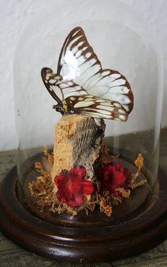 A beautiful antique Cloche featuring natural elements and a Butterfly.