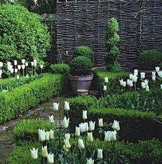 Boxwood, tulips, willow screen