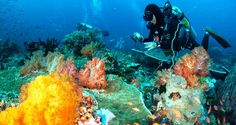 Day trip divers scuba diving in Phuket