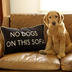 {rule breaker}  I need this pillow. My dog not only is determined to be on the vintage sofa as much as possible but he also really likes to climb on top of every throw pillow he can possibly reach. Silly dog.
