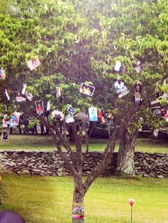 cute idea for displaying pictures at any outdoor occasion (picture of my graduation party)... use clothes pins to hang picture in tree branches and leaves!
