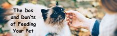 The Dos and Don'ts of Feeding Your Pet #pet #petcare #health #pethealth #cat #dog Pet Pet, Pet Health, Pet Care, Cats, Animals, Gatos, Animales, Animaux, Animal