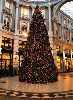 The Hague  de Passage Christmastree