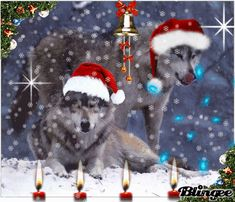 merry christmas wolves | Christmas wolves Picture #127348075 | Blingee.com