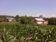 Mark & Naomi Beiler farm - Country Lane, Christiana, PA - Southern Lancaster County - July, 2011