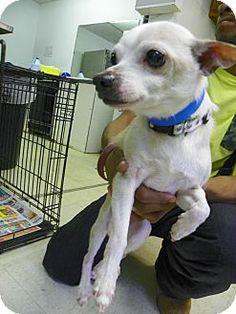 Dog Rescue Southampton Pa