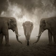 Photograph Elephant whisperer by Leszek Bujnowski on 500px