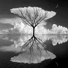 arbol blanco y negro