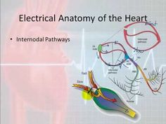 Electrophysiology equipment for reliable study of kHz ...