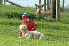 Pet Farm where people can see, feed and hold a range of animals throughout the day. Bottle feeding takes place at 2 pm daily with lambs/goats and chickens Valley Park, Bottle Feeding, Lamb, Ireland, Tours, Pets, Places, Animals, Animales