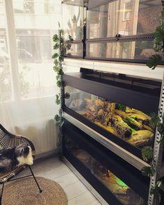 Reptile Habitat, Reptile Room, Reptile Cage, Reptile Enclosure, Reptile Tanks, Gecko Terrarium, Terrarium Reptile, Terrariums, Gecko Vivarium