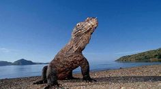 Top Indonesia Sightseeing Attractions - Komodo Dragon Park, situated inside of the Lesser Sunda Islands that incorporates the three bigger islands Komodo.