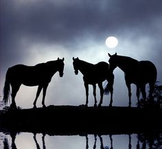 Horses in the moonlight, nice!