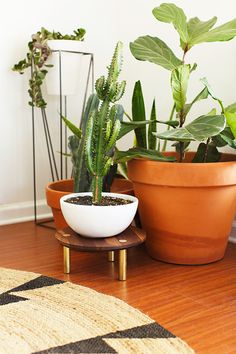 We think every home needs a green corner! #cactus #succulent #green #plants