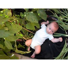 Love grows beautiful veggies and babies.