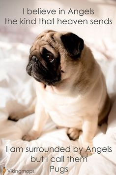 "See our internet site for more information on ""black pug puppies"". It is a great spot to learn more. Black Pug Puppies, Dogs And Puppies, Doggies, Gif Pug, Pug Gifs, Pug Quotes, Teacup Pug, Ewok, Pugs And Kisses"