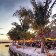Tropical-themed downtown Sarasota restaurant is located in Bayfront Park near Marina Jack and features live music daily. Dog-friendly, plus you can arrive by car or boat. Clearwater Florida, Sarasota Florida, Siesta Key Florida, Old Florida, Florida Vacation, Florida Travel, Florida Beaches, Vacation Spots, Beach Travel