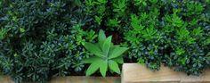 Lush planting design by landscape designer in Sydney