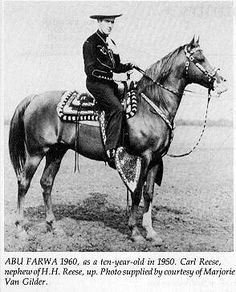 Photo: ABU FARWA | Arabian Horse: Abu Farwa album | Hypoint