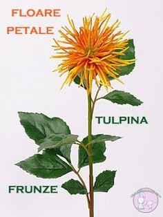 Science, Fall, Plants, Autumn, Fall Season, Plant, Planets