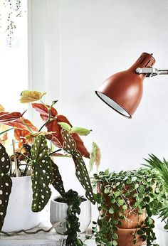 Use plants to bring colour into your home and choose accessories that echo their natural tones. Click the link to find more ideas for living with plants. Potted Plants, Cactus Plants, Indoor Plants Online, Rue Verte, Ikea Home, Begonia, Desk Lamp, Natural Light, Decorative Accessories