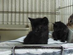 Piney kittens -- saved!