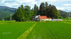 farmland Japan - null